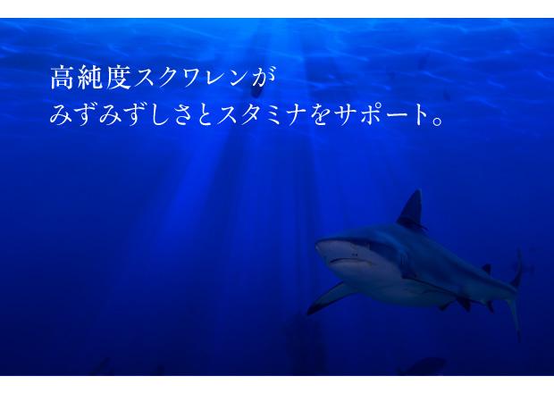 深海鮫エキスースクワランー